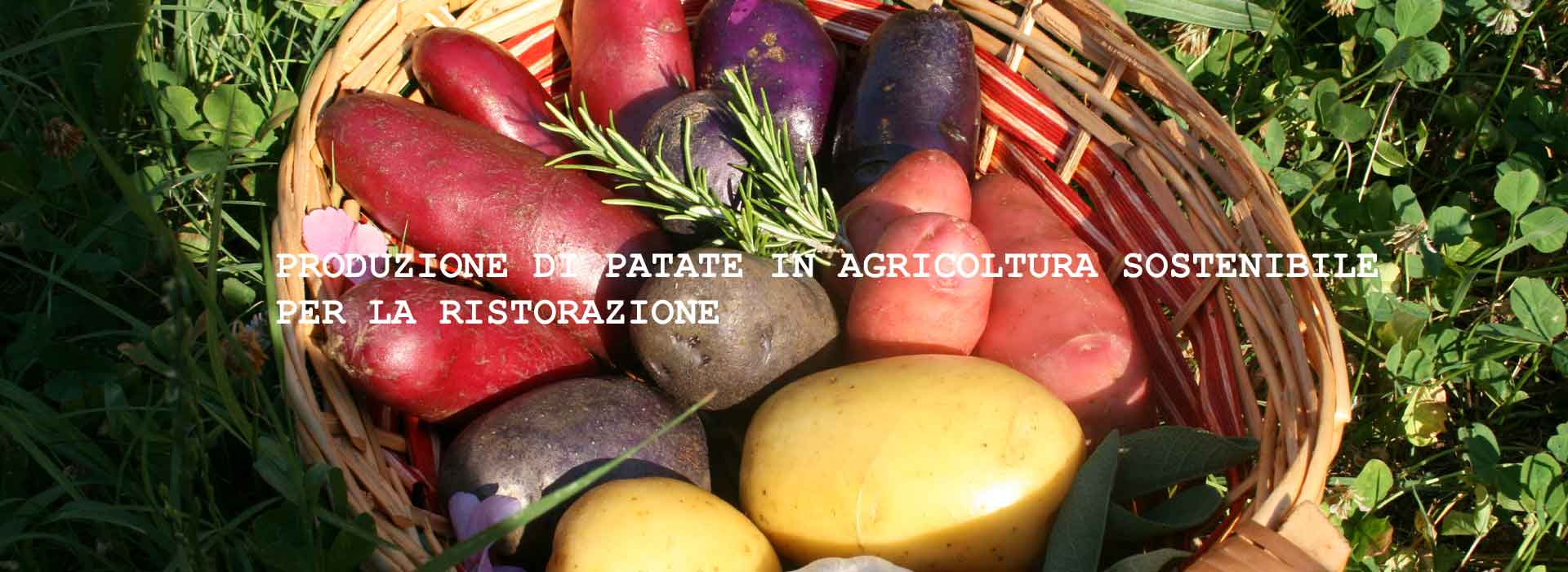 patate_hp_1
