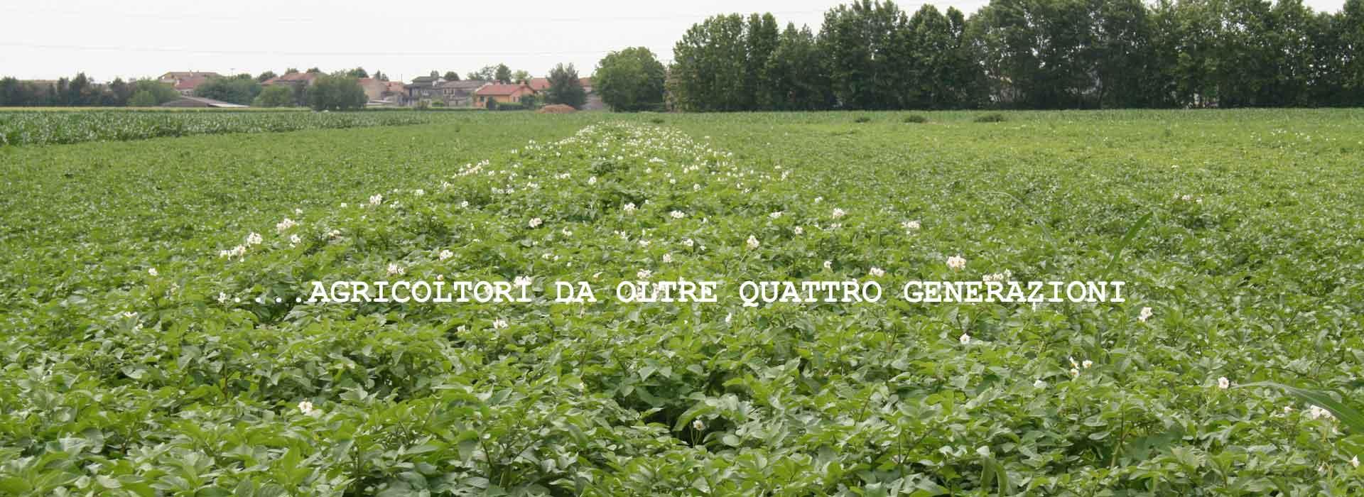 patate_hp_2